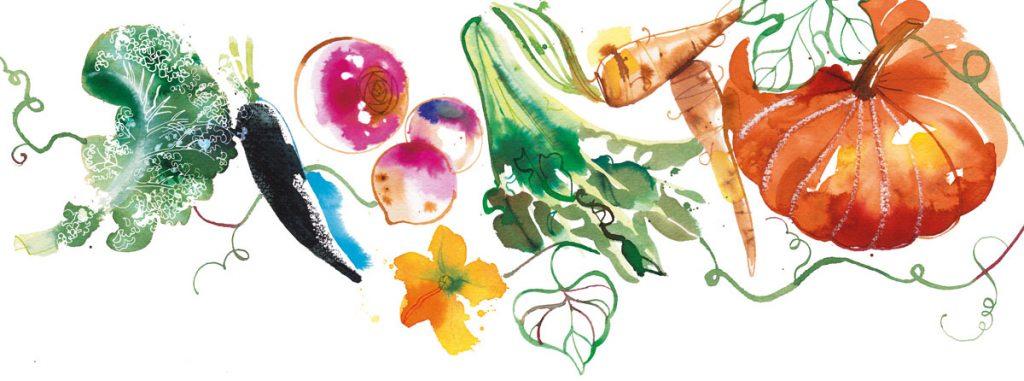 INEDIT Publications, food illustration of Autumn vegetables, watercolor