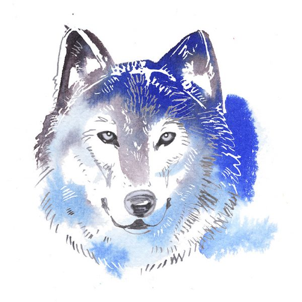 Wolf, watercolor illustration